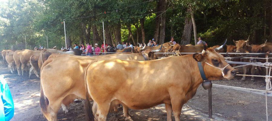 Más de 2.500 visitantes garantizan un espléndido futuro a la Feria de Ganado y Artesanía de Balboa